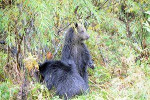природа и медведи