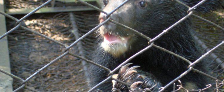 Реабилитация медвежат