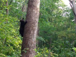 медвежий вольер