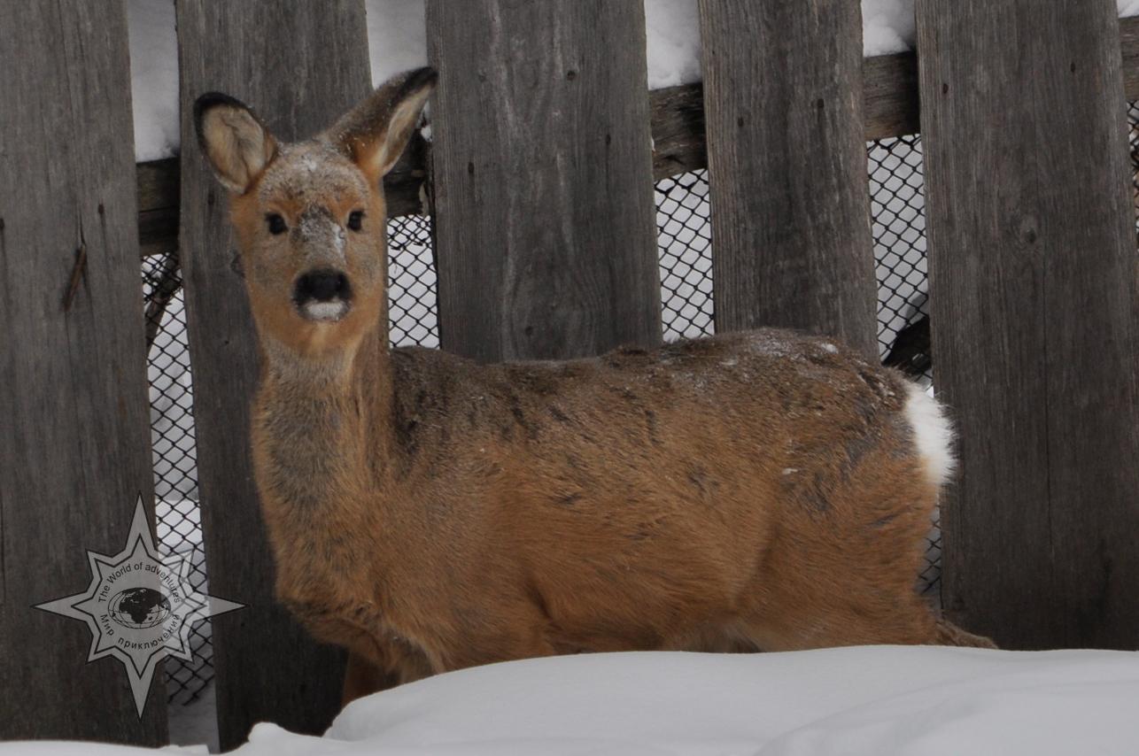Центр реабилитации животных Утес